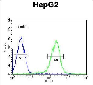 4 - SMAD6 Antibody (Center) AW5282